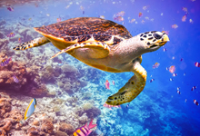 underwater view of sea turtle swimming